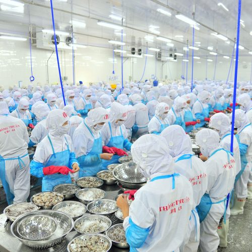 Workers are peeling and processing fresh raw shrimps in a seafood factory in Vietnam / Photo credits: Vietbox / 2015 / Source: depositphotos.com, ©2019